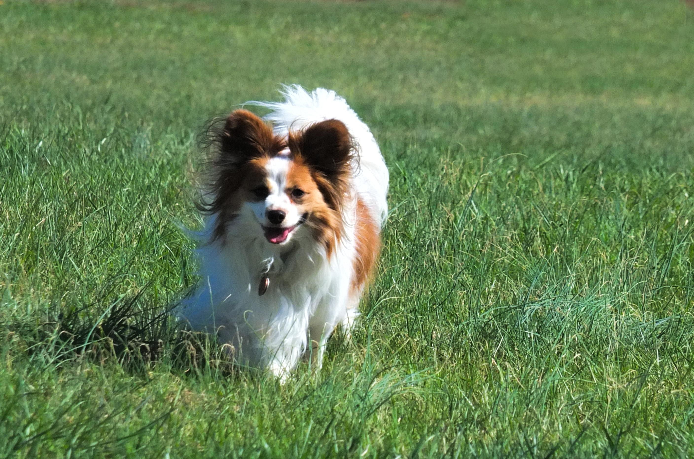 Dog running - remember pets also can bring in pollen from spring allergies