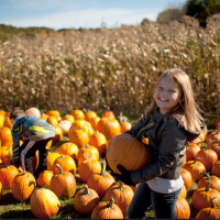 Area fun continues with fall festivals!
