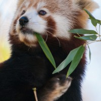 Smithsonian conservation center celebrates Autumn Festival