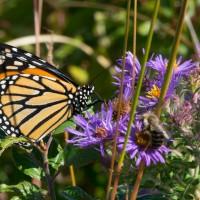 Town of Herndon hosts free community NatureFest Sunday, 9/27