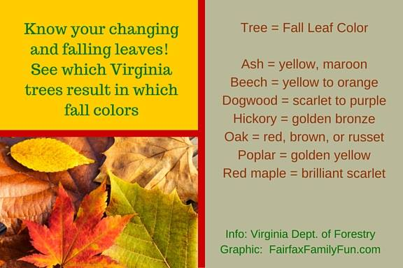 Autum leaves:  leaf-peeping tips for fall, what trees produce what color leaves