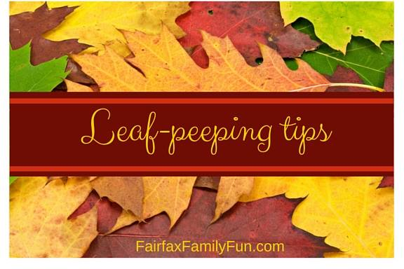 Leaf-peeping tips card for autumn leaves in Virginia