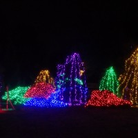 Experience the magic of Winter Walk of Lights