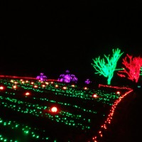 Winter Walk of Lights:  Holiday beauty at Meadowlark