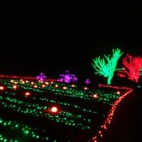 Winter Walk of Lights:  Holiday beauty at Meadowlark