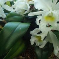 DC Tour:  United States Botanic Garden