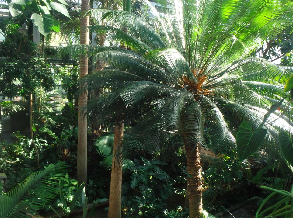 DC Tour: United States Botanic Garden - Fairfax Family Fun