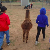 Fun on the farm at Leesburg Animal Park's Pumpkin Village