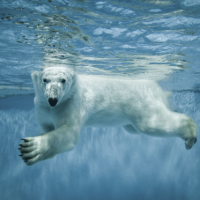 Northern Virginia polar plunge events benefit charities