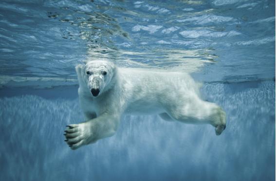 Polar plunge events in Northern Virginia