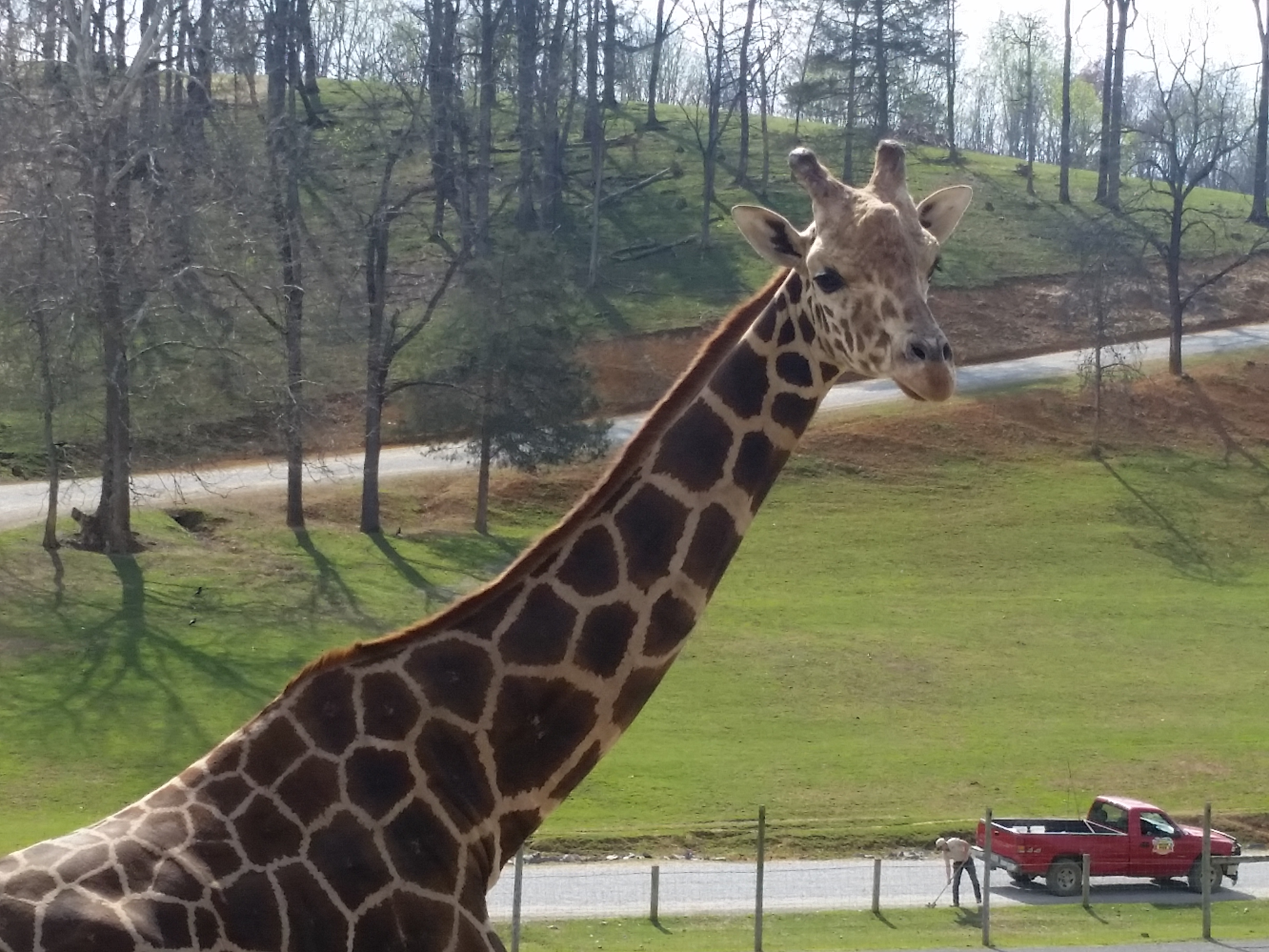 Animals And Adventure At Virginia Safari Park