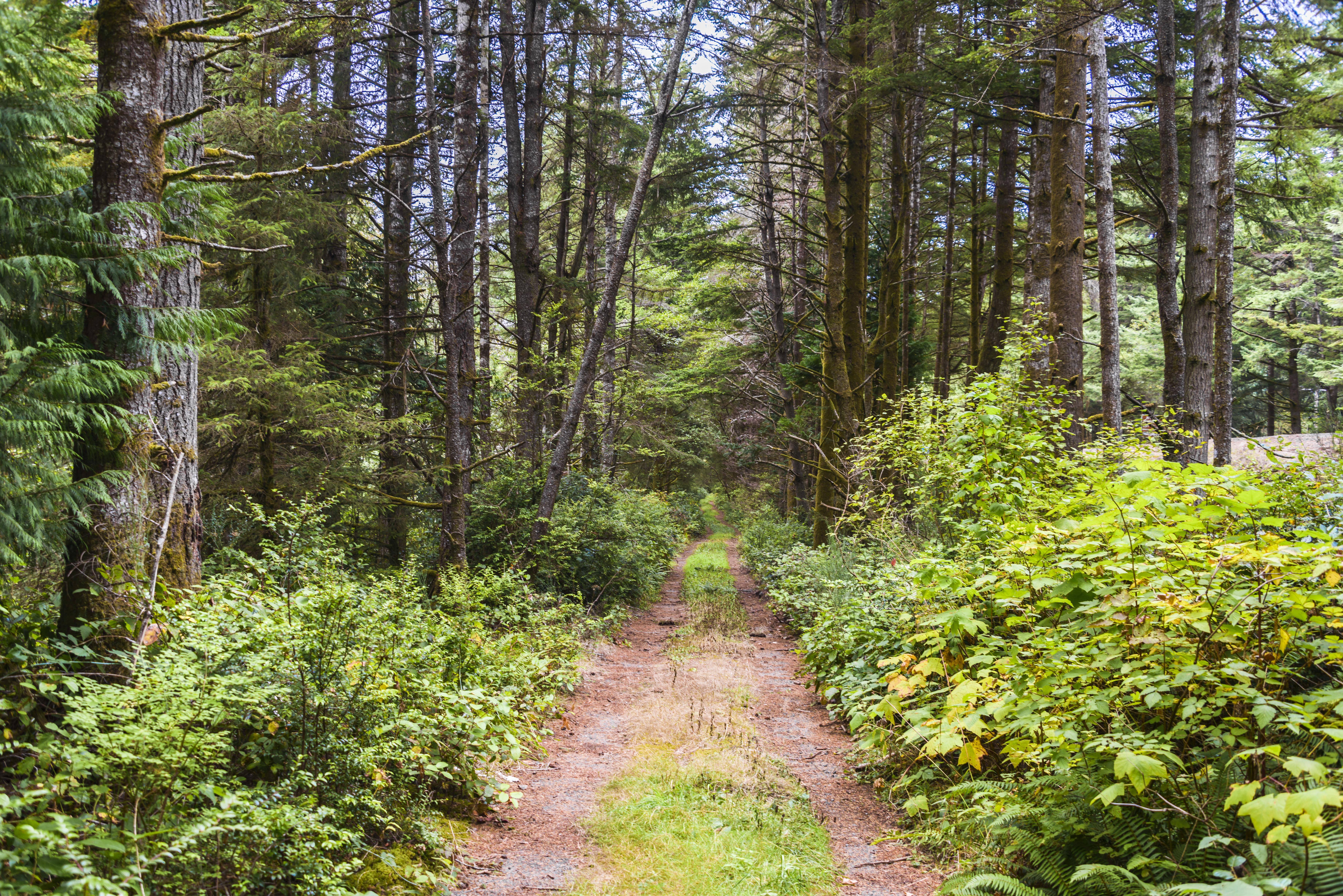 forest scene for BioBlitz events