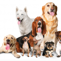 Reston Town Center hosts annual Pet Fiesta