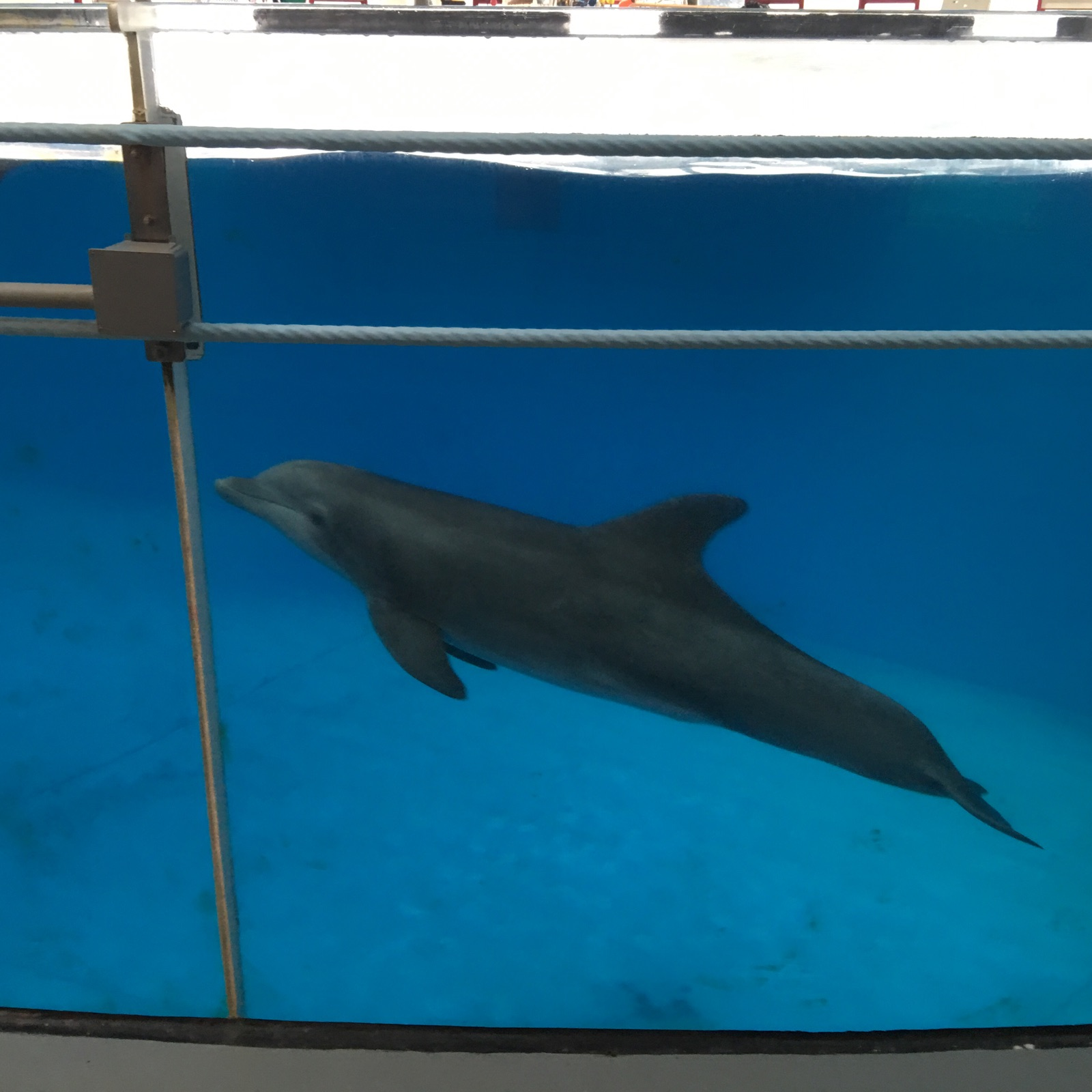 Dolphin Discovery at National Aquarium