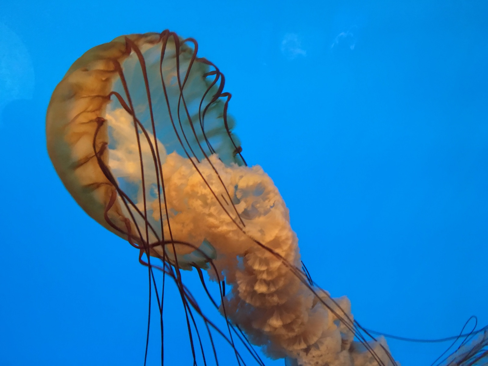 All kinds of jellyfish