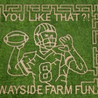 Wayside Farm Fun Fall Festival: a hidden gem in Berryville