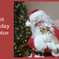 Santa Claws:  Here's where to get your pet holiday photos