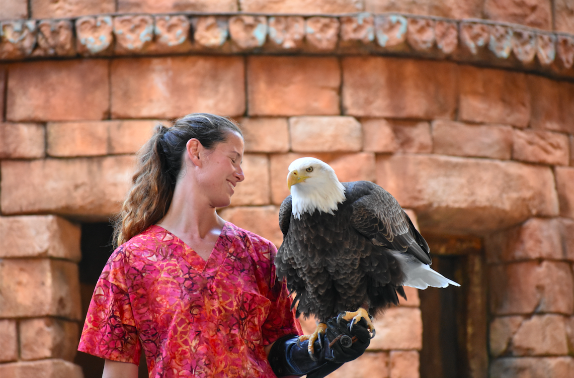A woman holds an eagle during the Flights of Wonder show at Disney World's Animal Kingdom theme park