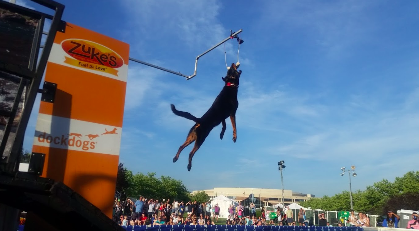 Dog jumping show, Dock Dogs at Celebrate Fairfax