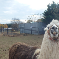 Fall for fun at Leesburg Animal Park's Pumpkin Village
