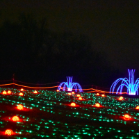 Enjoy bright beauty at Meadowlark's Winter Walk of Lights