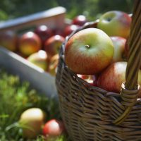 Tips for picking your own apples