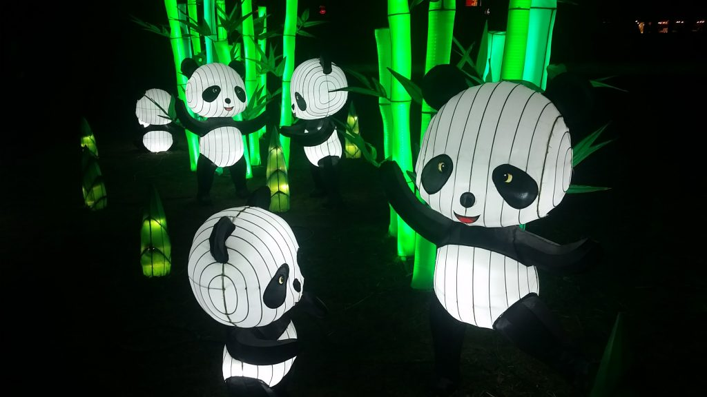 Panda lanterns and bamboo at winter lanterns show