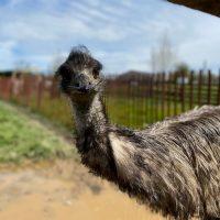 Leesburg Animal Park Transforms Into Drive-Through Zoo